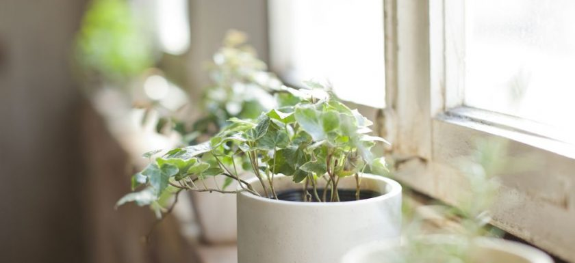 houseplant-benefits