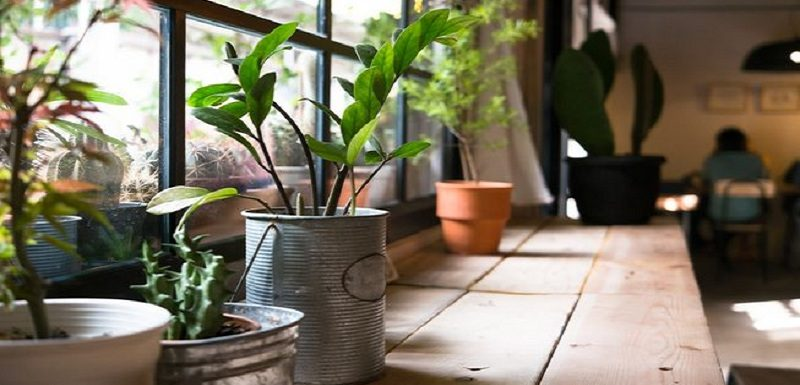 The Top Best Houseplants