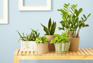 indoor-houseplants