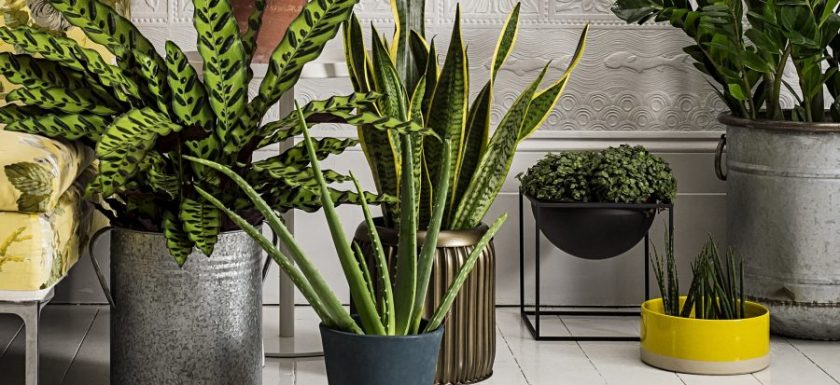 top best houseplants for you