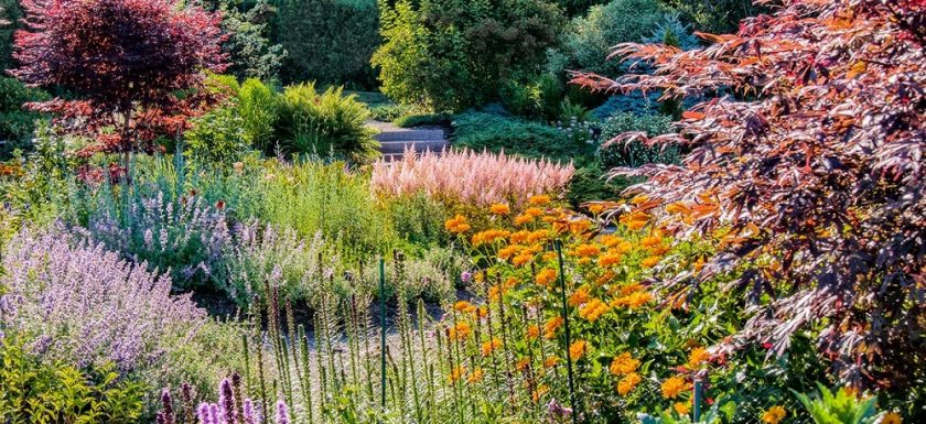 Why is Ecological Restoration Beneficial for your Garden