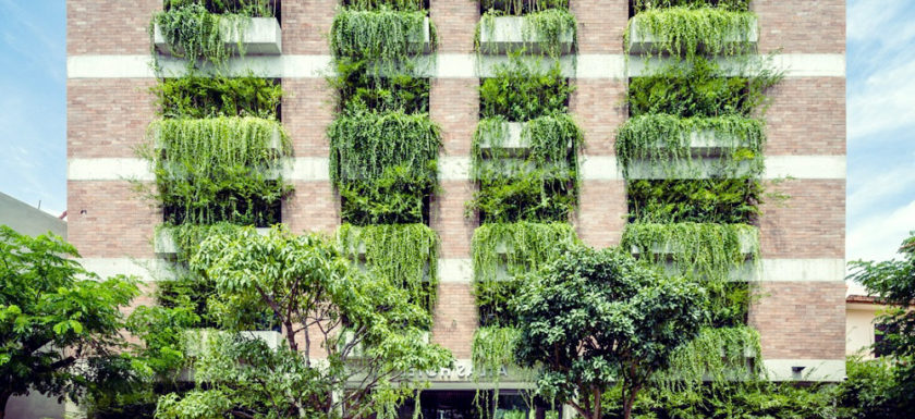 Vertical gardens solve space problem and promotes food security
